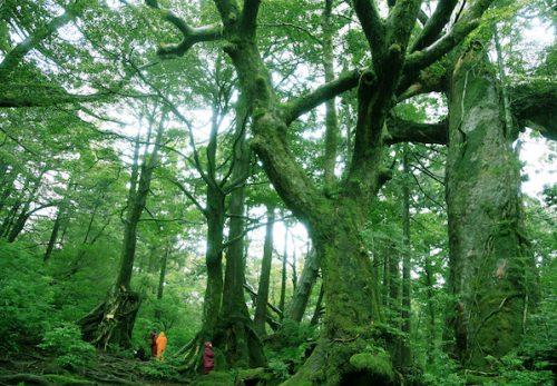渋谷パタゴニアで「雨の屋久島の魅力」を語ります